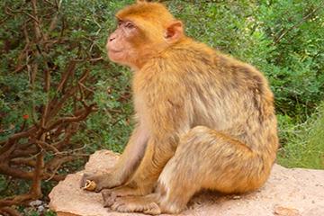 faune et flore au Maroc